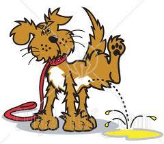 Vad gör man med en revirkissande hund? /erviluca