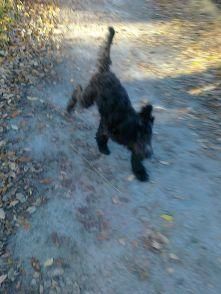 Fiona och Milton 27 oktober 2012 043