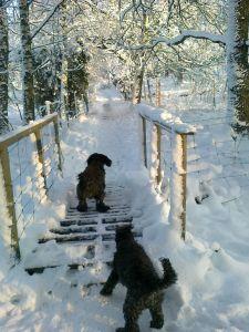 Vacker vinter dag 2012-12-02 008