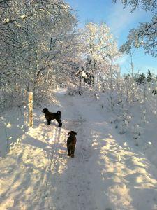 Vacker vinter dag 2012-12-02 011