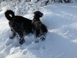 Vinterbilder februari 2013 promenad med Fiona och Milton 044