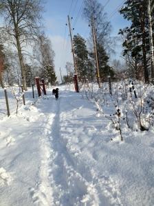Vinterbilder februari 2013 promenad med Fiona och Milton 133