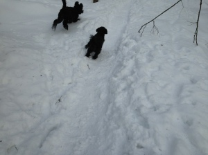 februari 2013 hundarna 019