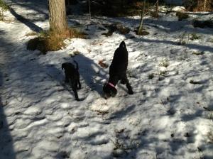 Fiona nyklippt och utebilder hundar mars 2013 014