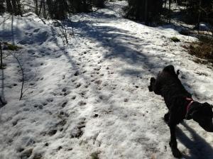 Fiona nyklippt och utebilder hundar mars 2013 029