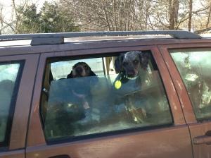 Fiona nyklippt och utebilder hundar mars 2013 031
