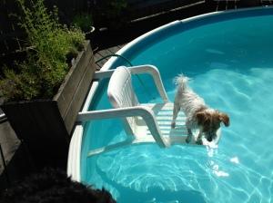 Hectors pool 2013-07-13 002