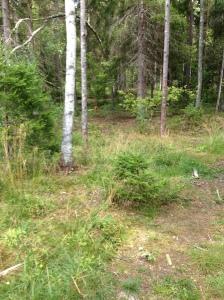 Vilse i skogen 2013-08-10 003