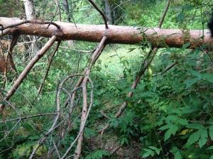 Vilse i skogen 2013-08-10 014