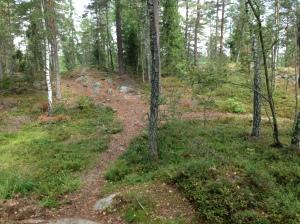 Vilse i skogen 2013-08-10 037