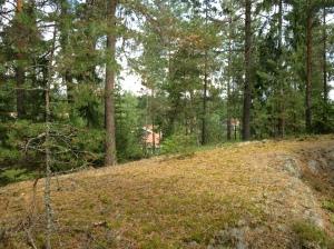 Vilse i skogen 2013-08-10 038