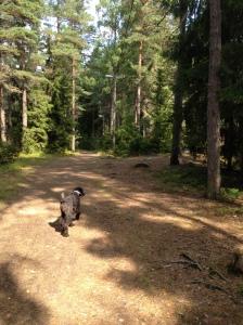 Vilse i skogen 2013-08-10 050
