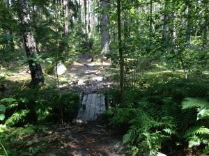 Vilse i skogen 2013-08-10 051