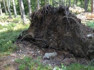 Vilse i skogen 2013-08-10 054