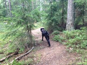 Vilse i skogen 2013-08-10 065