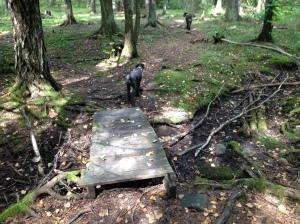 Vilse i skogen 2013-08-10 084
