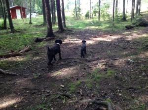 Vilse i skogen 2013-08-10 095
