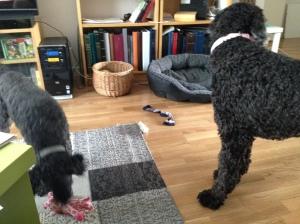 Dragkamp mellan Fiona och Milton sept - 13 051