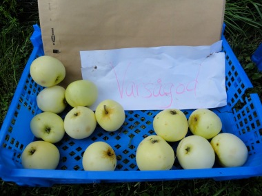 äpplen gratis