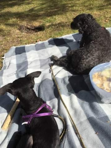 Cecilia och Milton på picknick