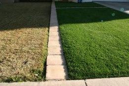 gräset grönare