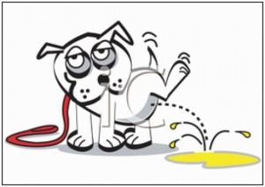 kissande-hund