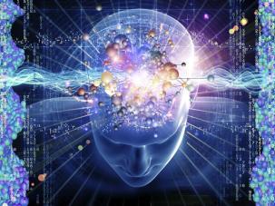 inuti hjärnan