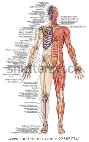 kroppen inuti.jpg