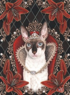 cornish rex drottning.jpg