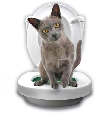 katt toalett 4