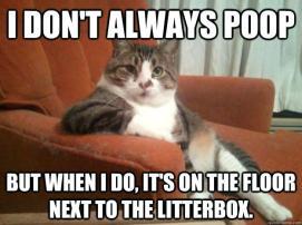 katt uttalar sig