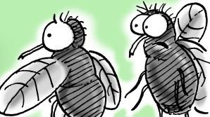 flugor som diskuterar